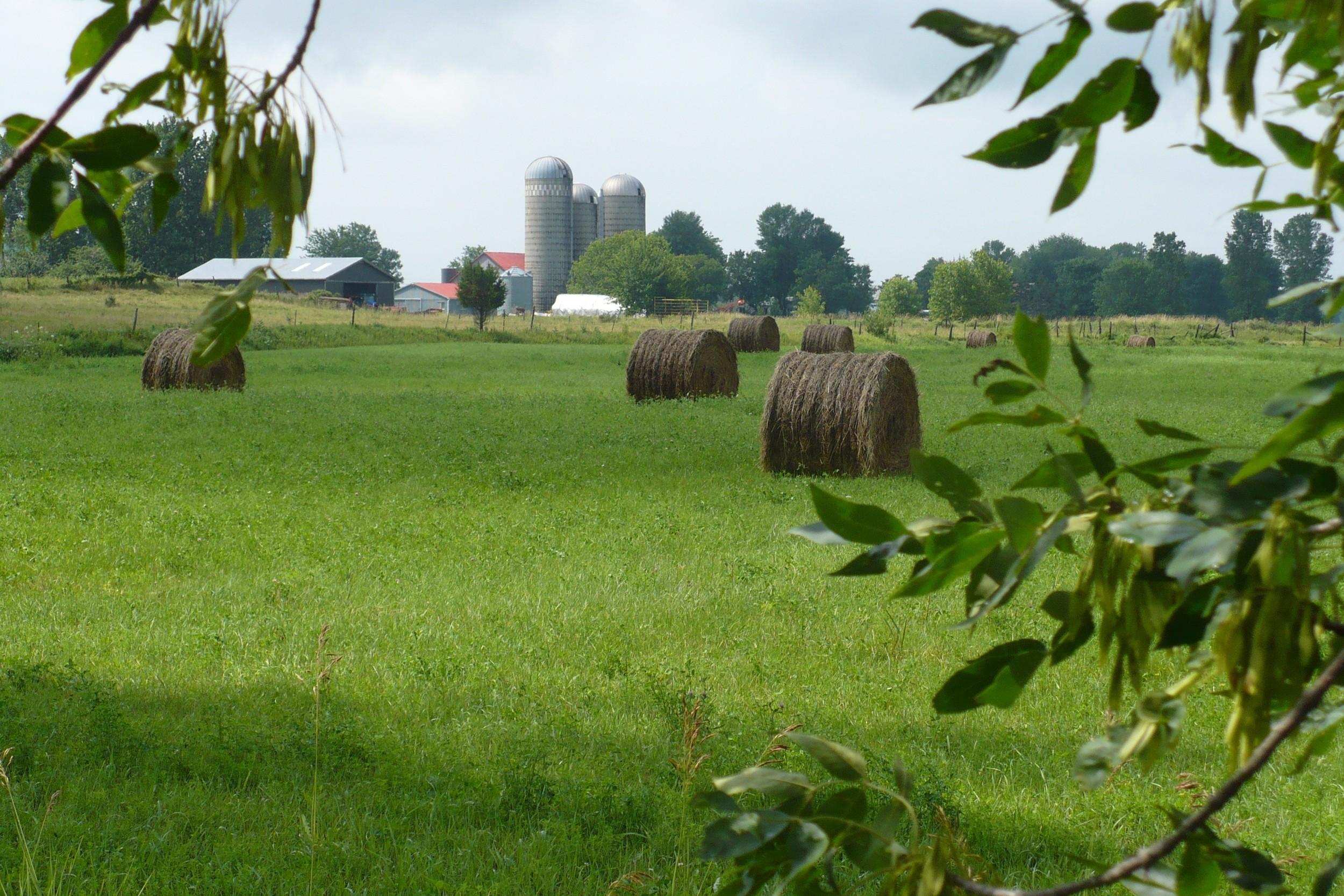 Farmer's field 1.jpg