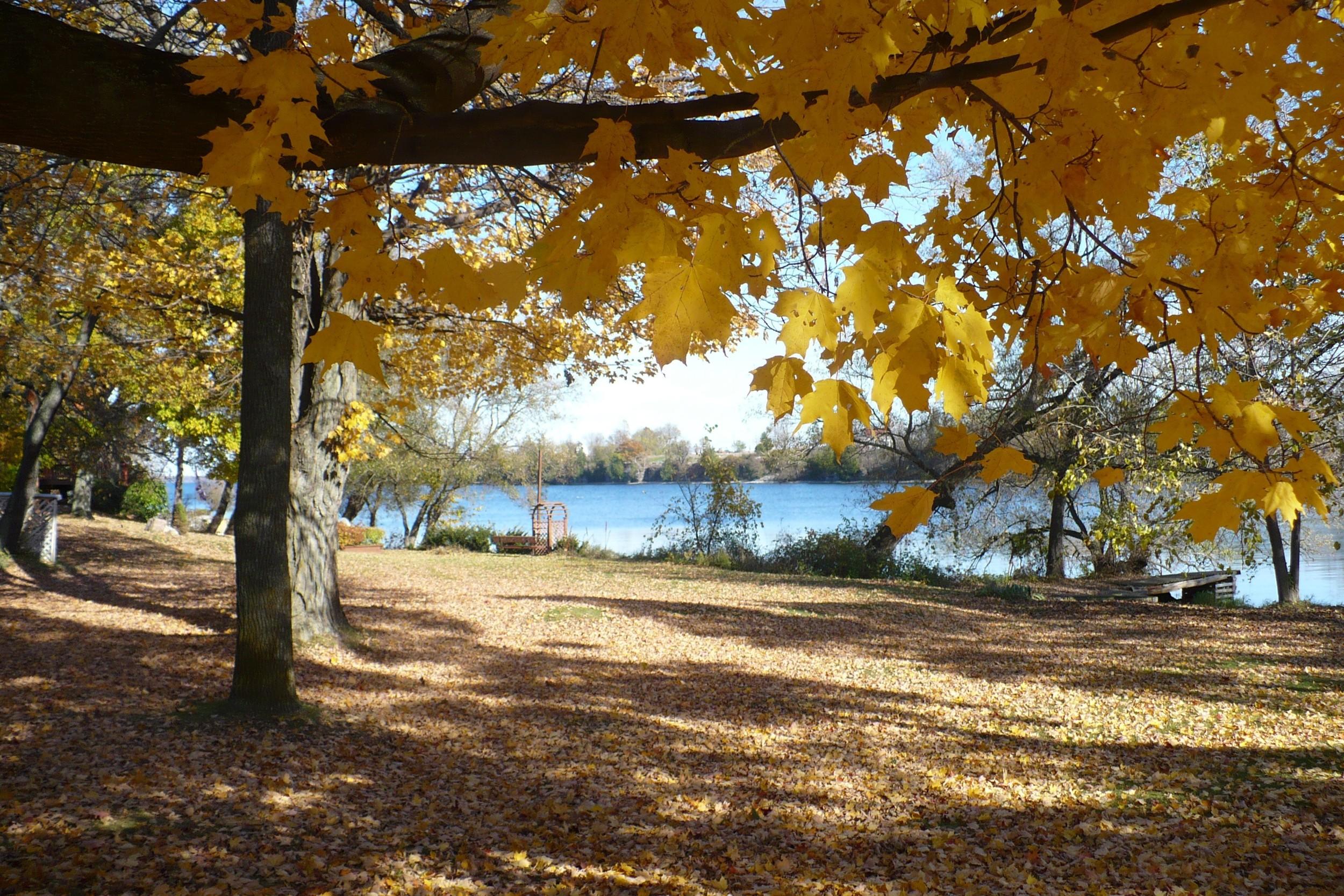 October trees 1.jpg