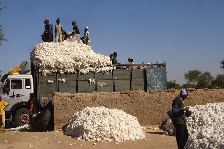 http://3.bp.blogspot.com/_sv_SOl1hq70/S8xiYbHPcZI/  AAAAAAAABvs  /z-B6mdMlfuw/s1600/  mali-cotton.jpg