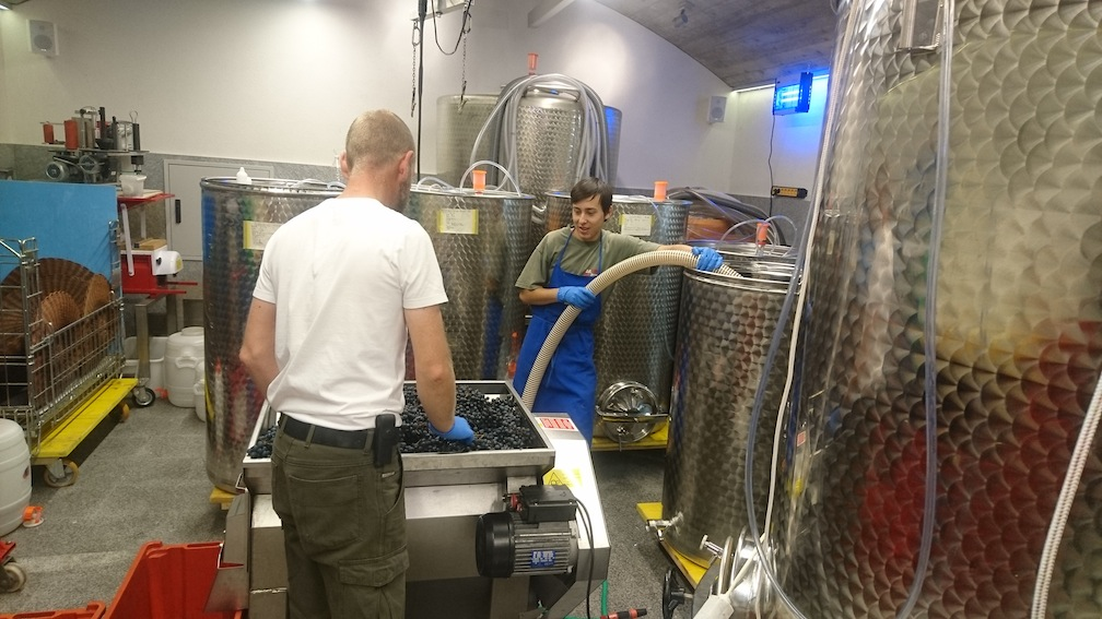 Observing the winemakers: The grape bunches were weighed, then dumped into a machine that separates the grape from the vine.