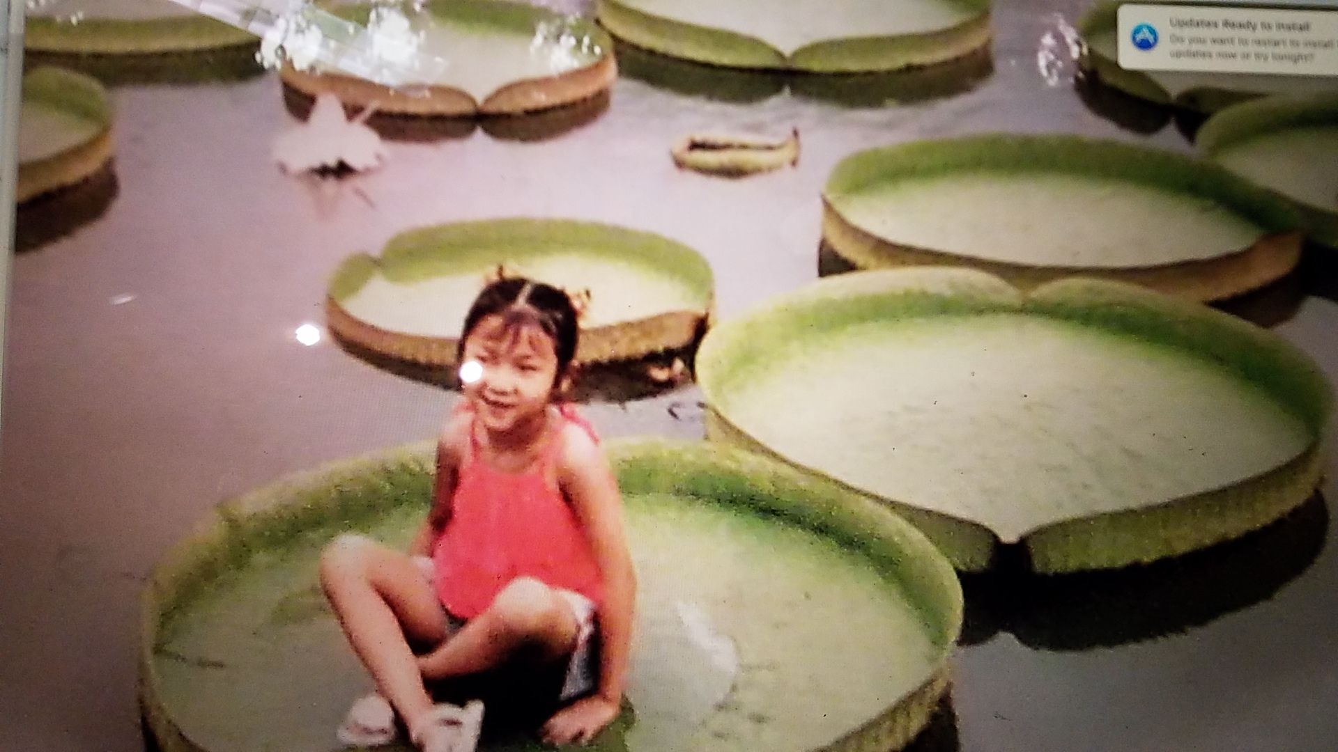 This was a photo hung in a pavilion of Dagguan park, showing how massive the lilies could grow.
