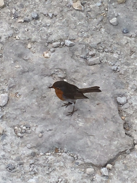 Bird who followed me for a long time