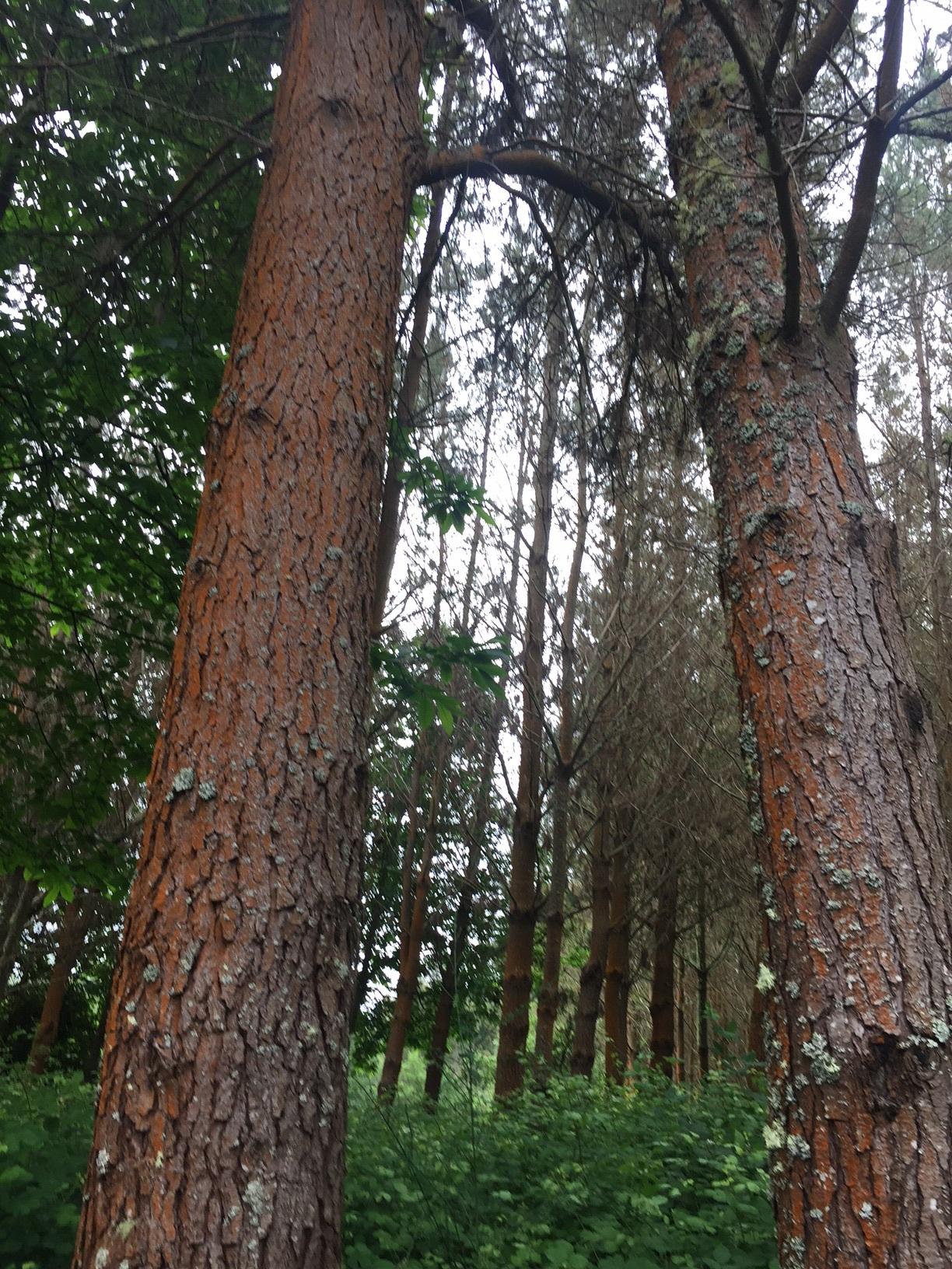 Orangewood forest