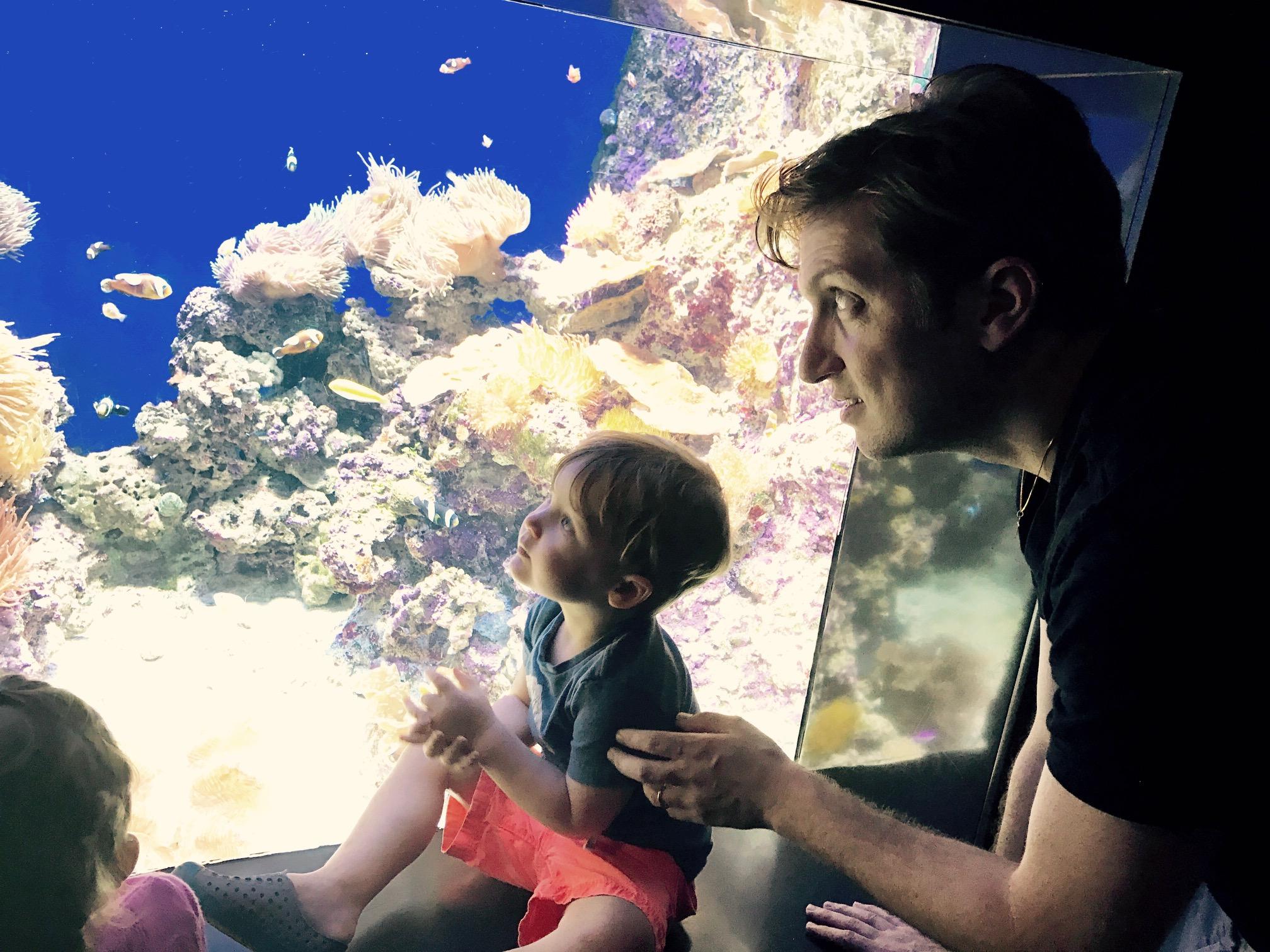 Looking at the fish