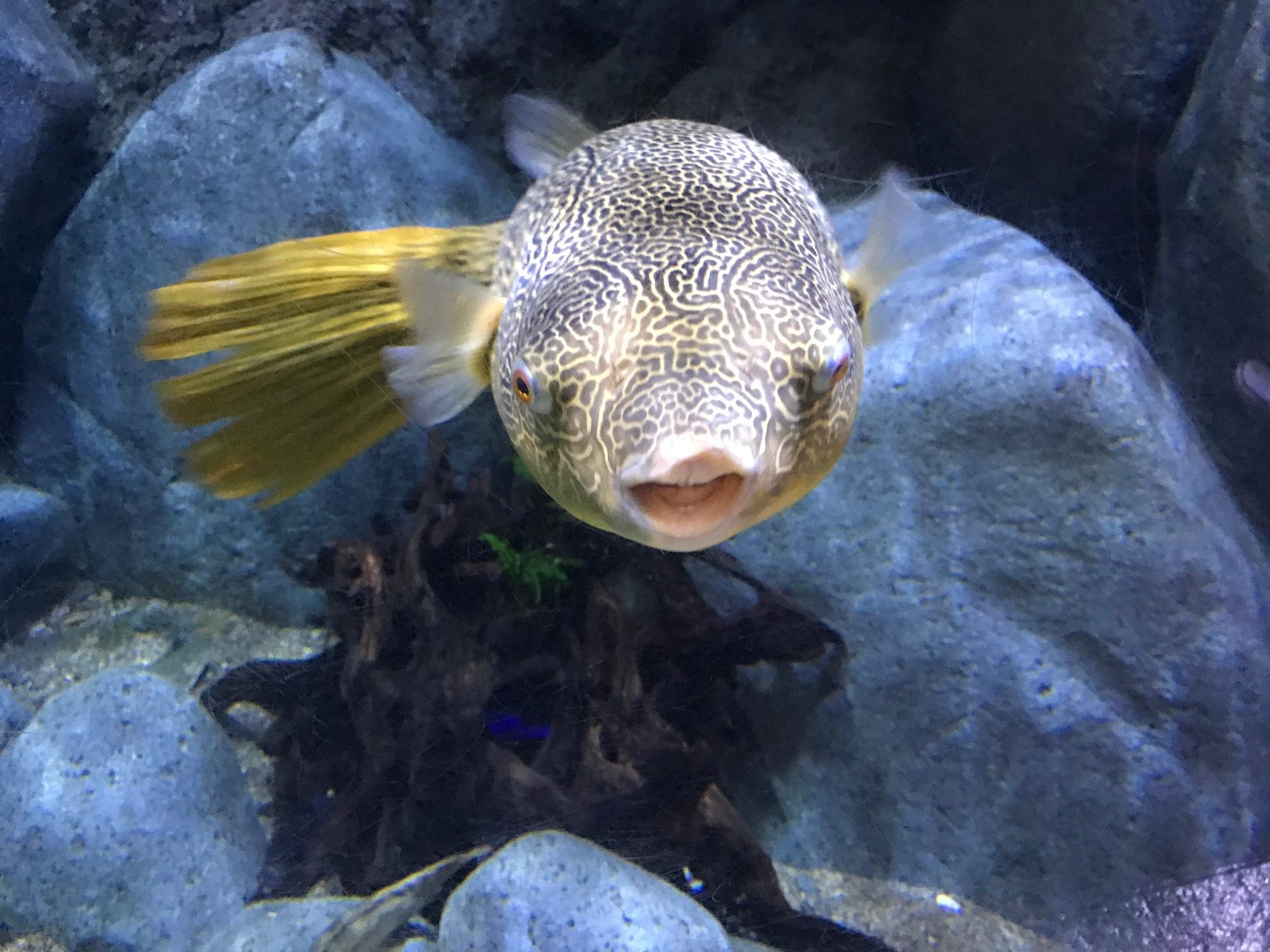 Fish looking at us
