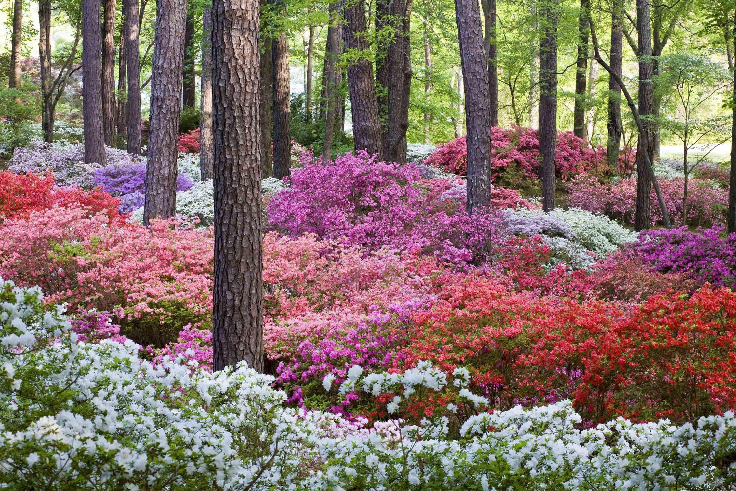 Overlook Garden 355.jpg