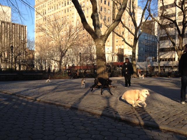 stuyvesant-dog-park.jpg