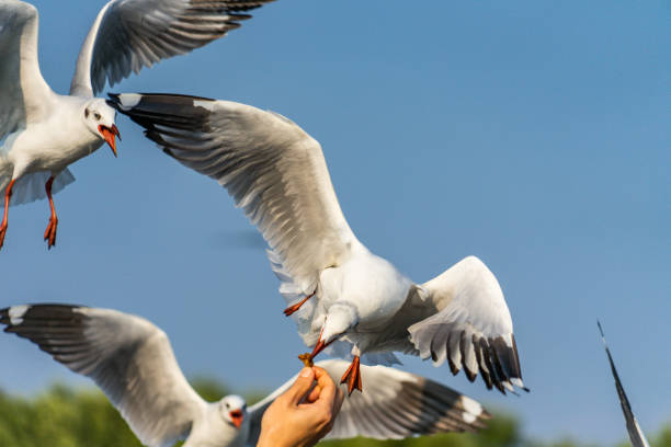 seagulls being fed.jpg