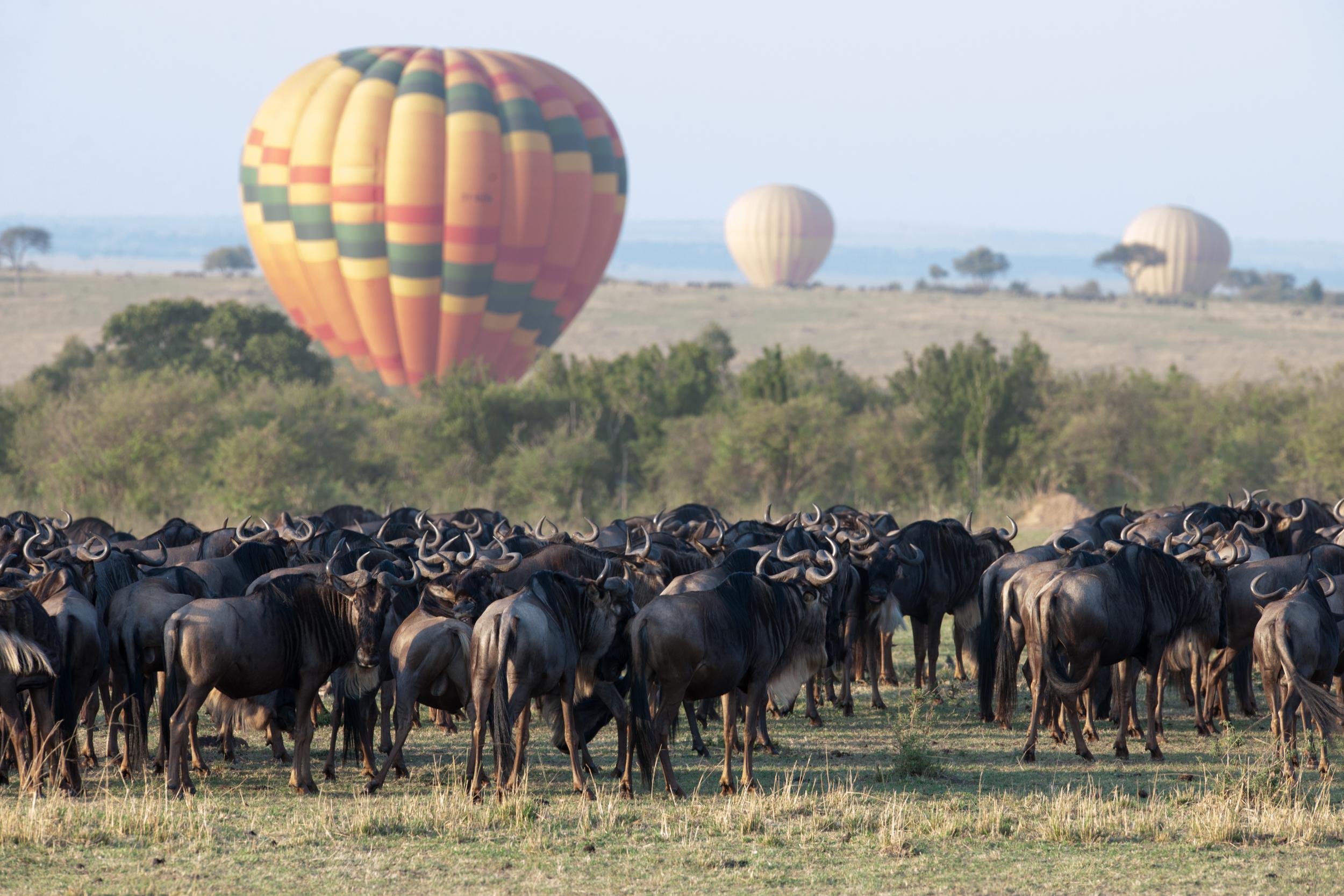 kenya-migration-wildebeest-hot-air-balloon