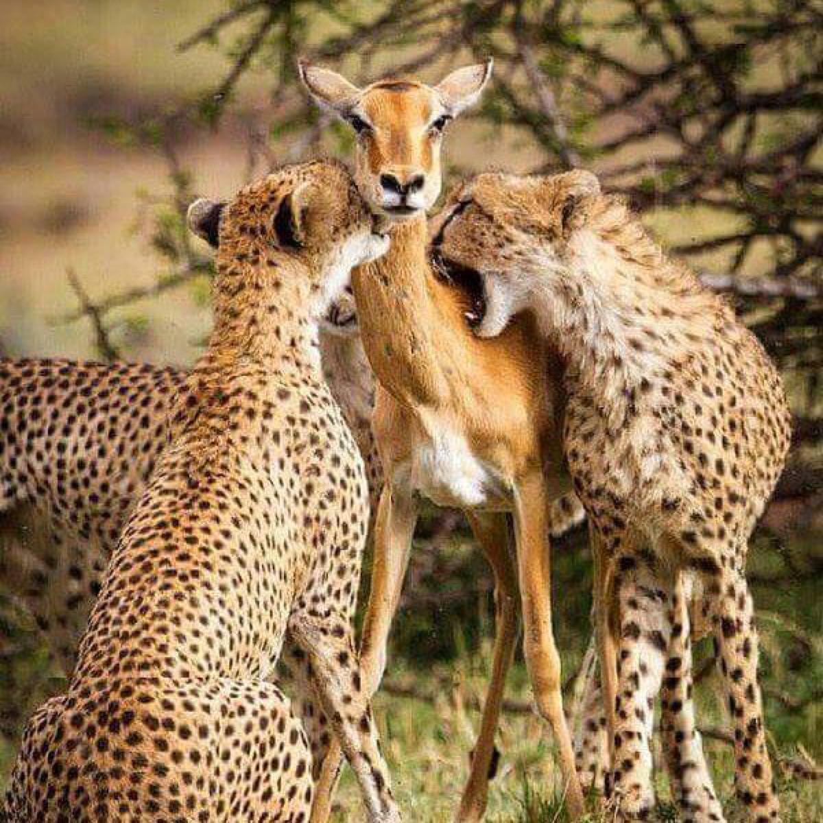 Circle of Life on Safari