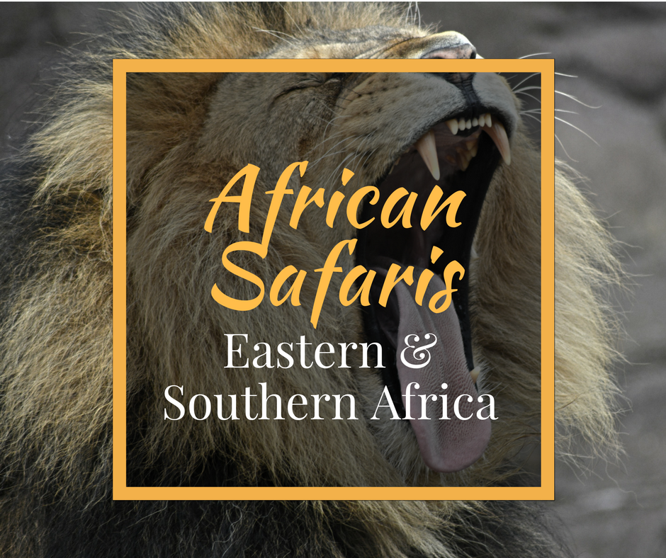 IntroverTravels African Safaris