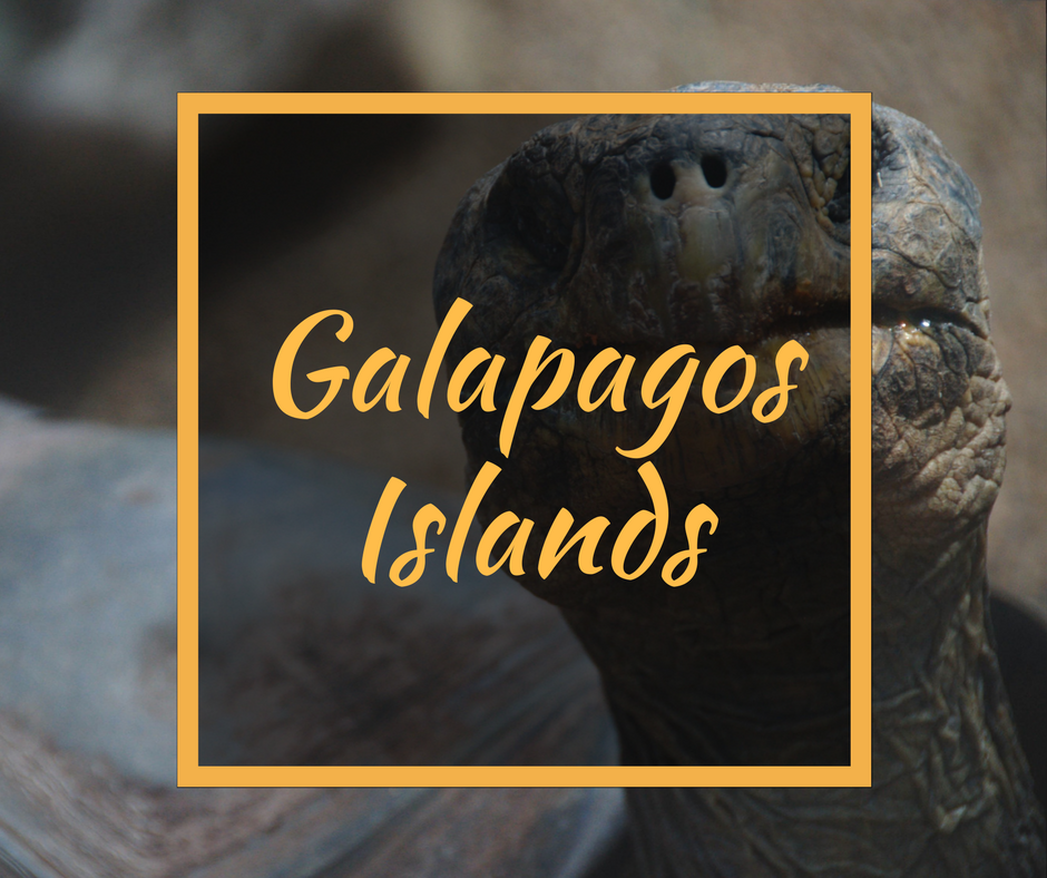 Galapagos Islands Travel for Introverts