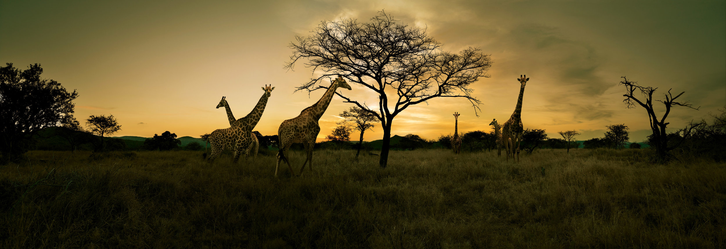 IntroverTravels African Safaris (Photo Credit South Africa Tourism.jpg