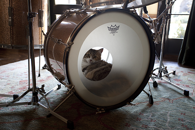 Jackson Browne's cat  (Los Angeles, CA)