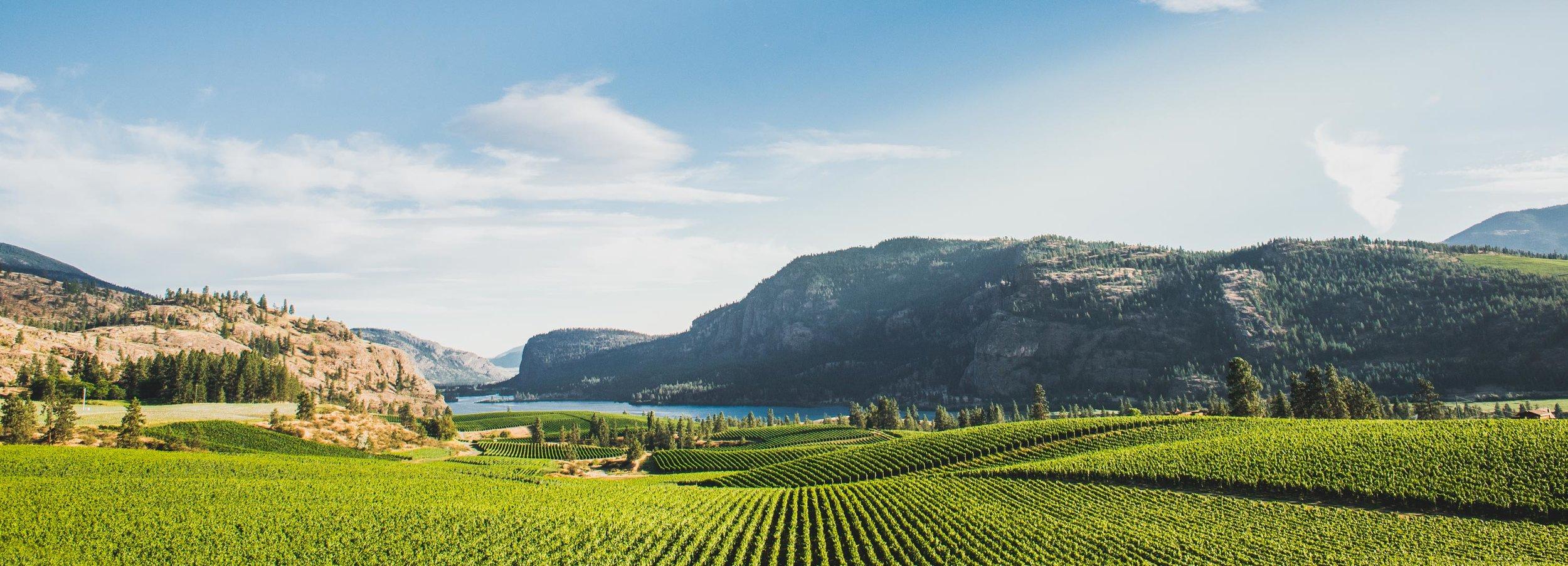 Wine Tasting Vineyard.jpg