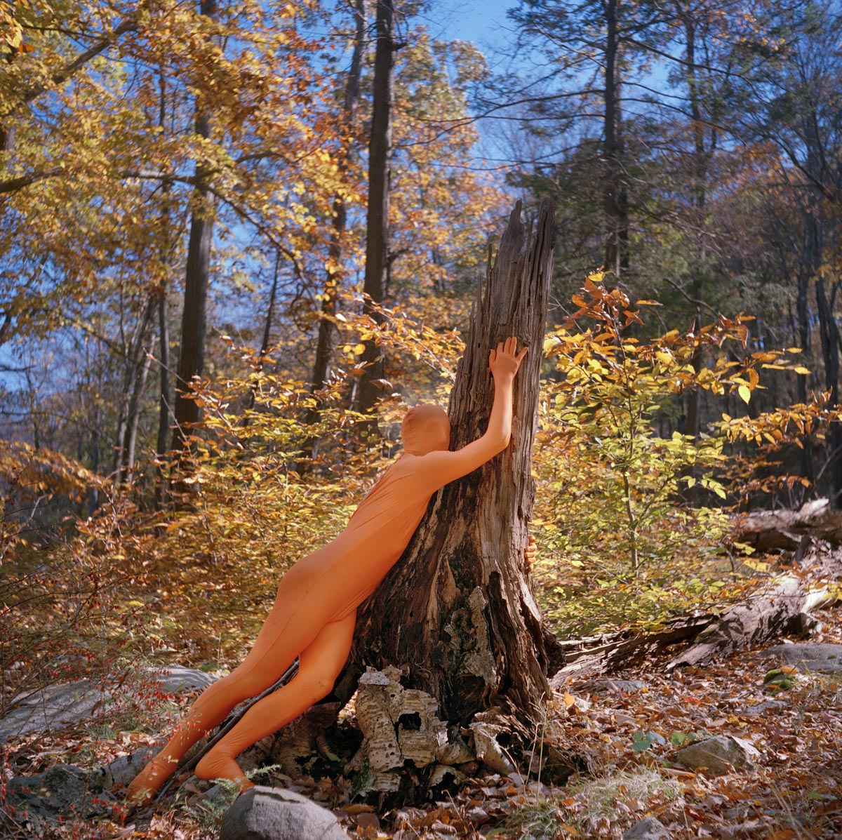 Matthew Morrocco, Hugging Tree