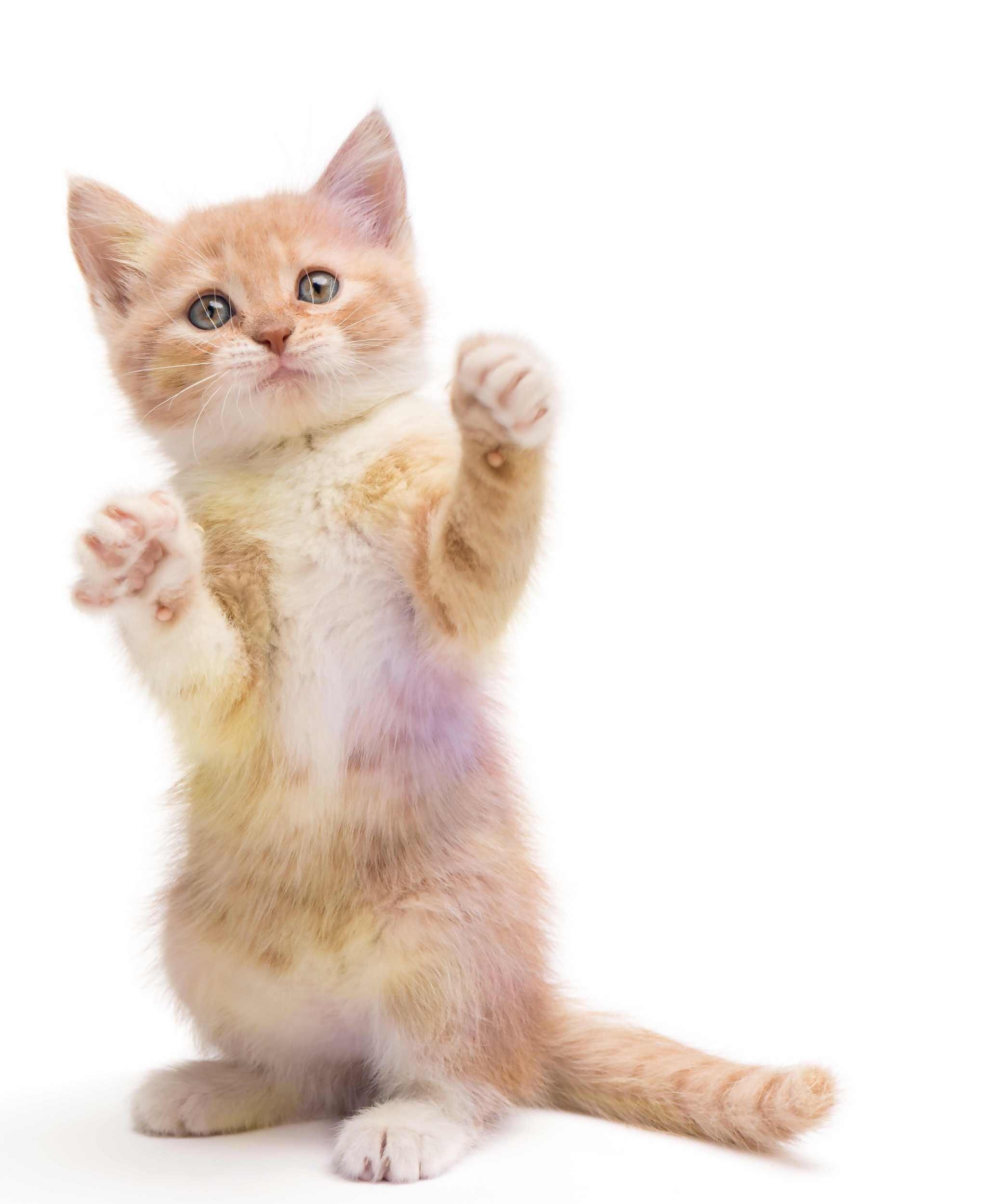 Kitten_2