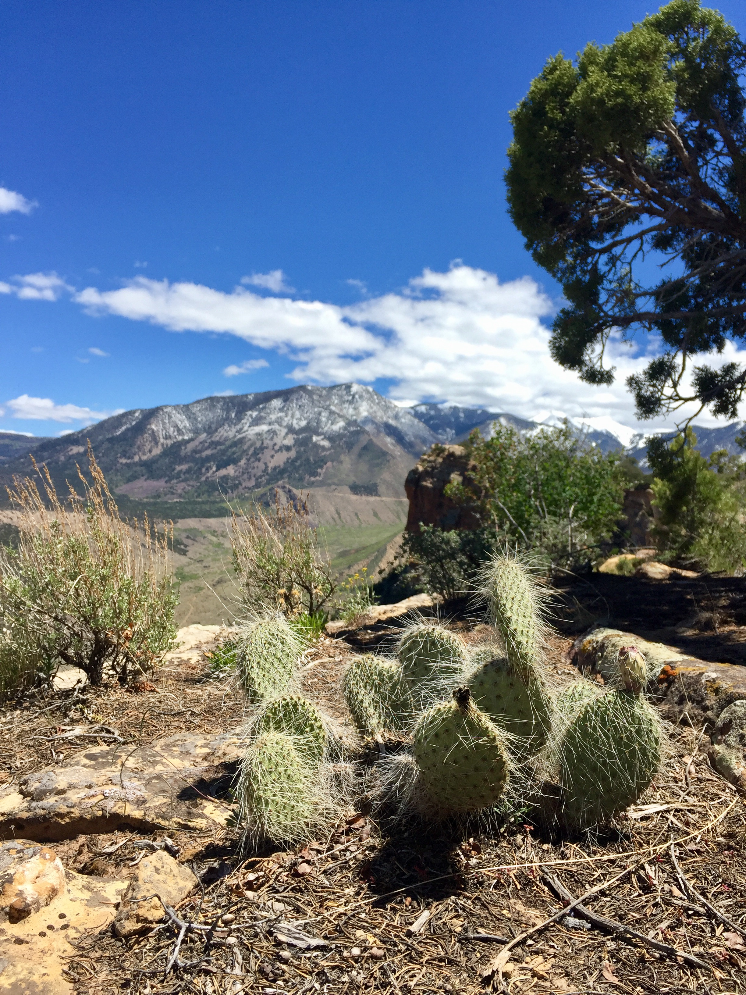 Moab_The_Whole_Enchilada_7.jpg