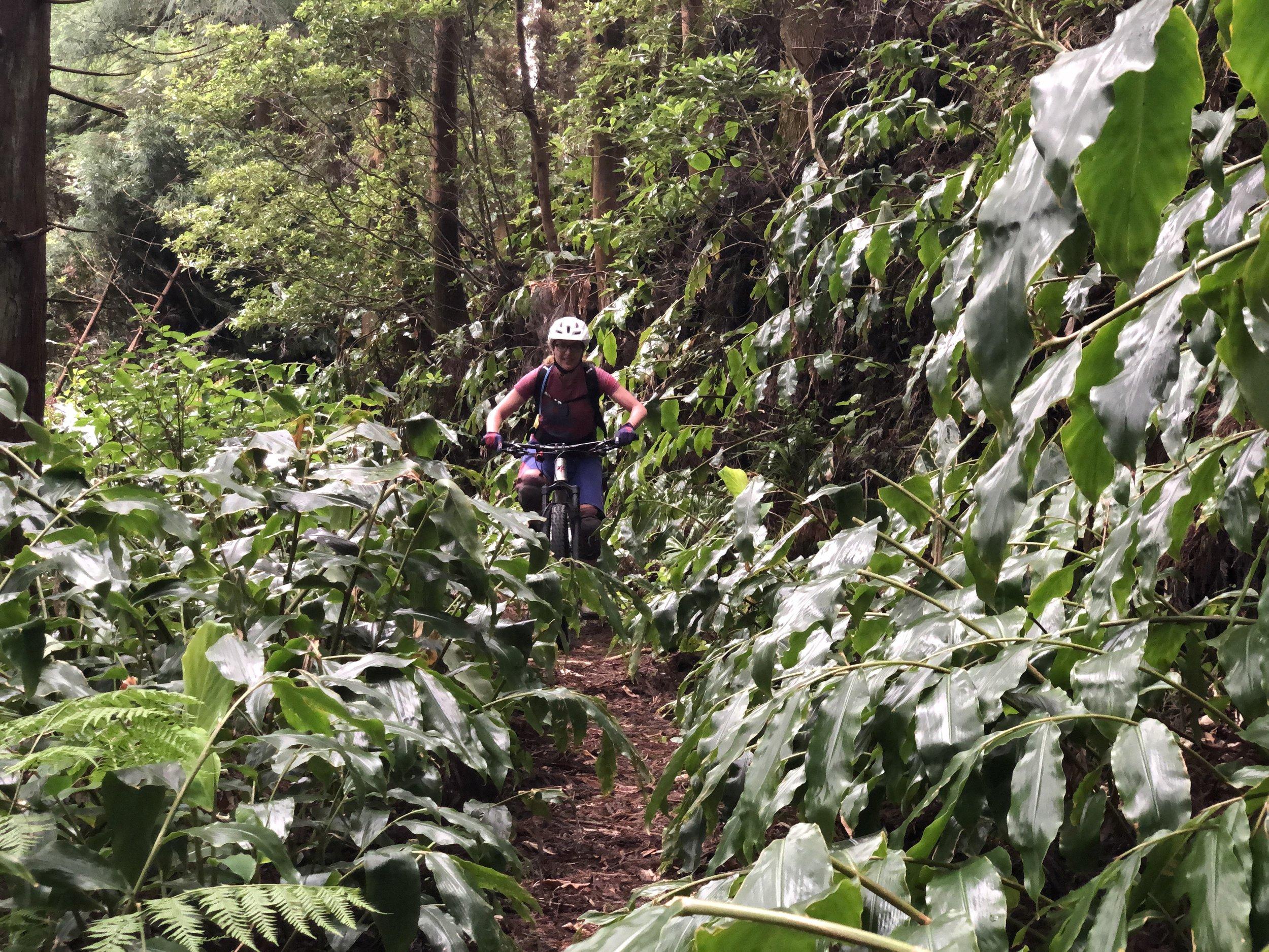 Dschungel-Trail