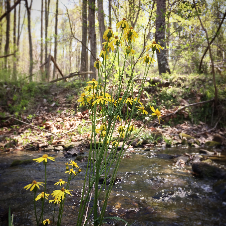 yellow creek flowers