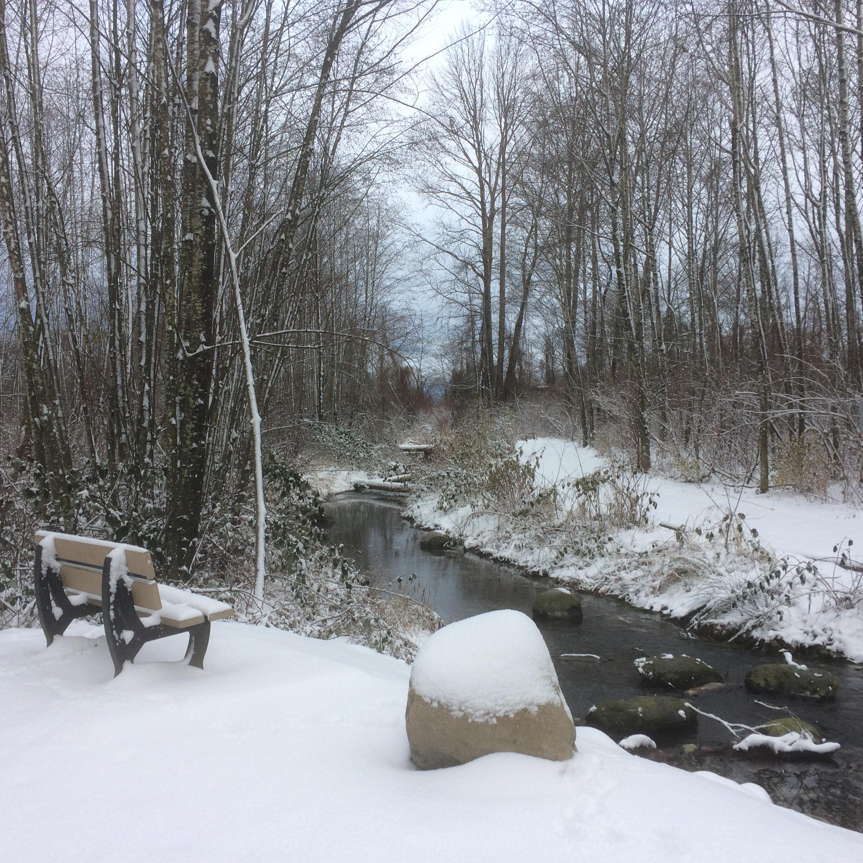 Kingfisher in Dec w snow.JPG