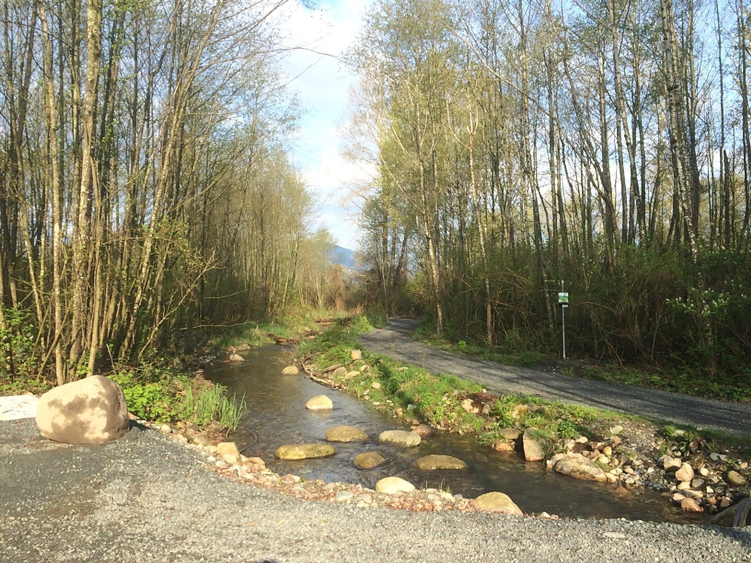 Kingfisher Trail April 2015 am.JPG