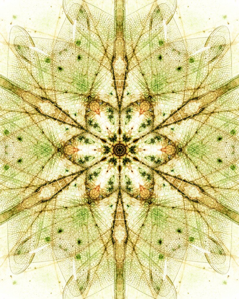 6 leaf snowflake dragonflies edit (deep magazine 2) 16x20 print.jpg