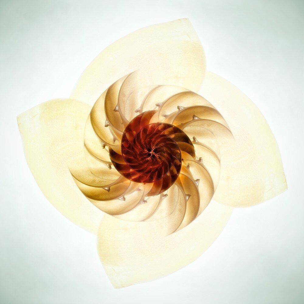 nautilus flower 12''.jpg