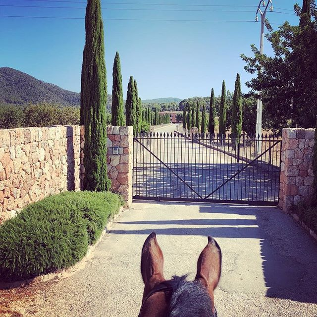 Here they come.... here is where everything starts, let the celebrations commence! ⠀⠀⠀⠀⠀⠀⠀⠀⠀ ⠀⠀⠀⠀⠀⠀⠀⠀⠀ #fincaescabas #horseridingmallorca #mallorcaweddingplanning #destintionweddingplanner #ukdestinationweddingplanner #mallorcaweddingplanner #elleventweddingplanning #ukweddingplanner #destinationweddingplanner #mallorcaweddingplanner #palmademallorcaweddingplanner #londonweddingplanner #romanticwedding