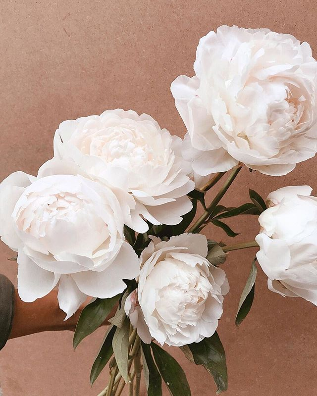 Peonies, a timeless and classic choice that comes in lots of colours, easy to combine with other types of flowers and its easy to source them throughout the year 😉#elleventweddingplanning #ukweddingplanner  #ukweddingplanner #londonweddingplanner #southeastweddingplanner #destinationweddingplanner #mallorcaweddingplanner #palmademallorcaweddingplanner #londonweddingplanner #romanticweddingdress #mallorcaweddingplanning #destintionweddingplanner #ukdestinationweddingplanner #mallorcaweddingplanner #weddingbouquet #peonyweddingbouquet