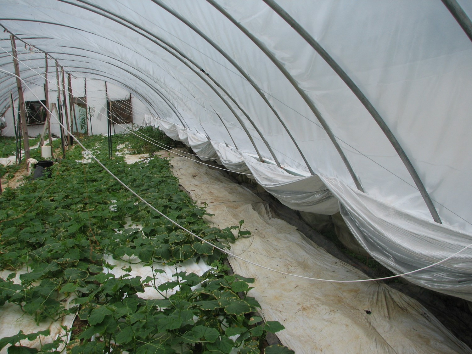 Shade curtains allow greenhouse operators to control how much sun and how much shade their plants are getting during the day.