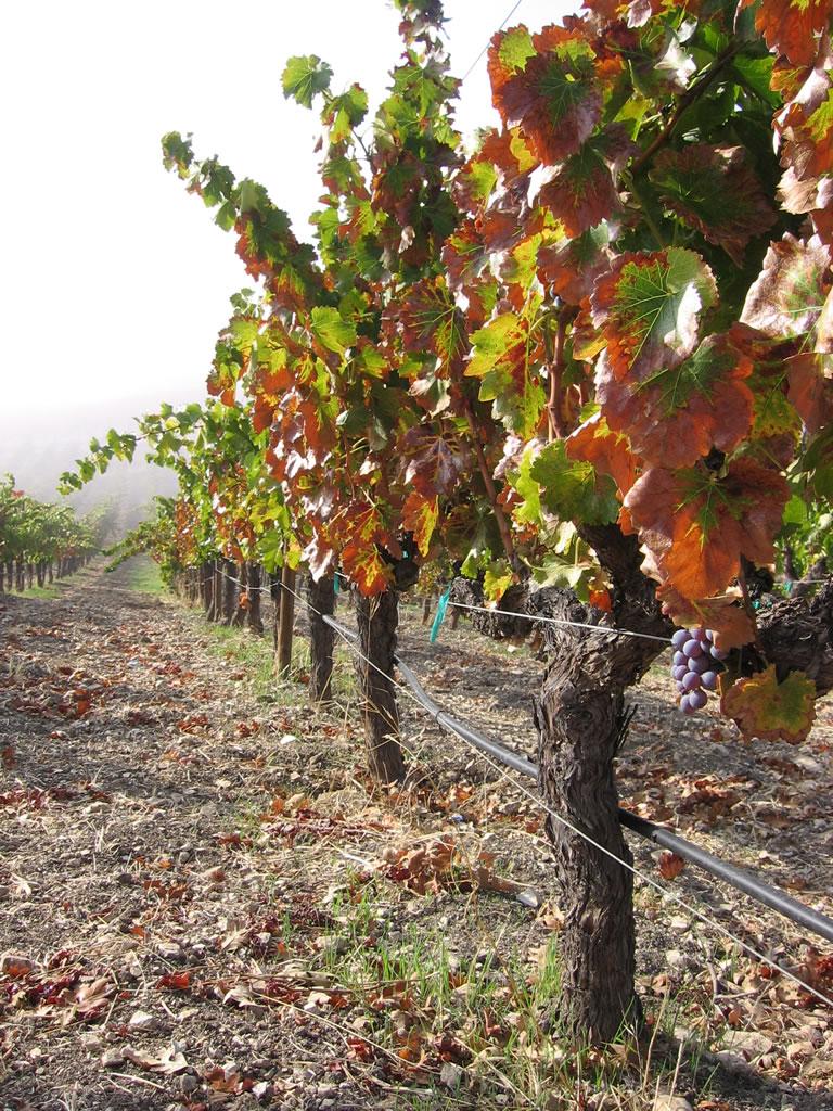 Tablas Creek Vineyard | California