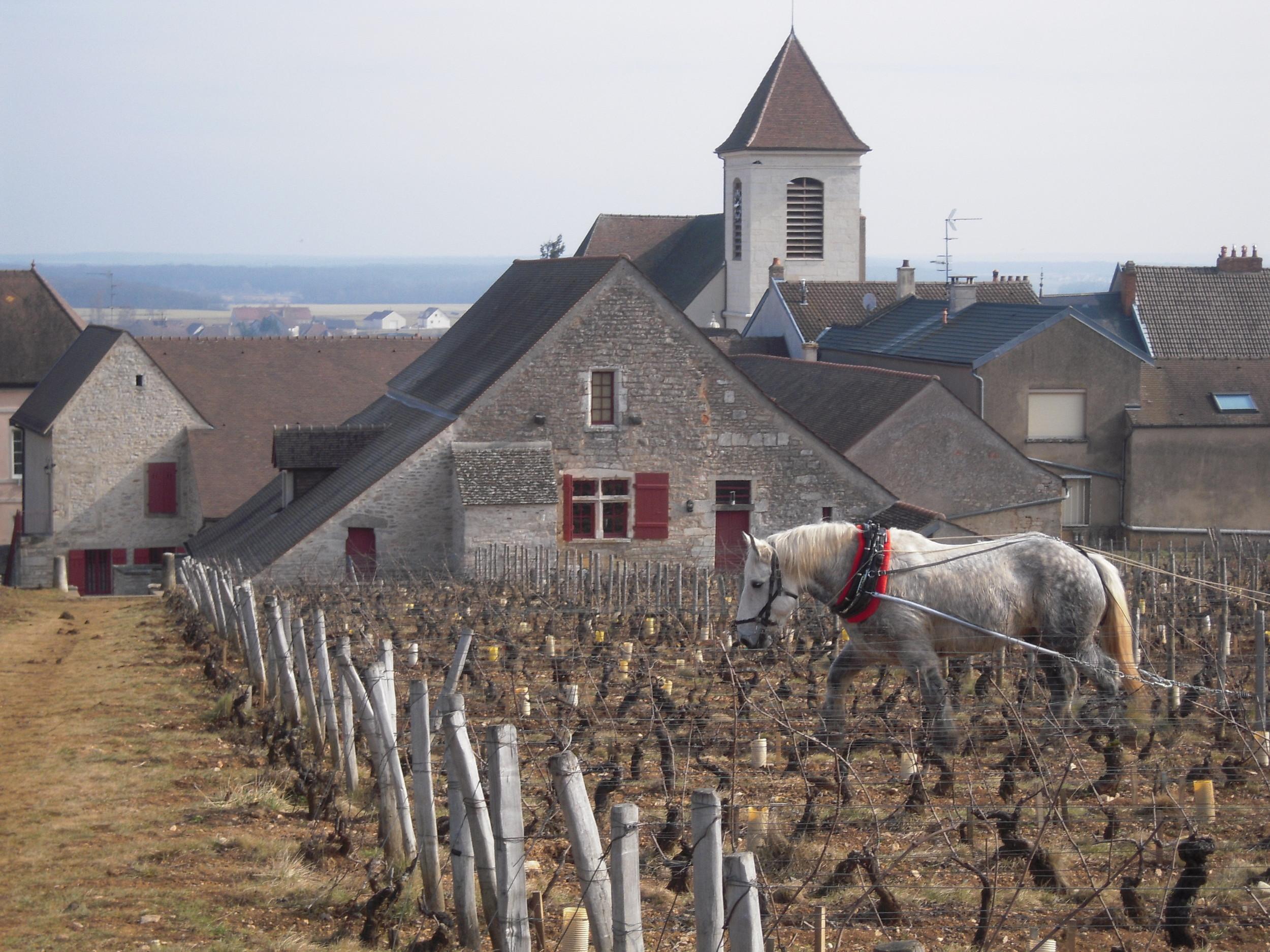 Clos de Tart | Burgundy