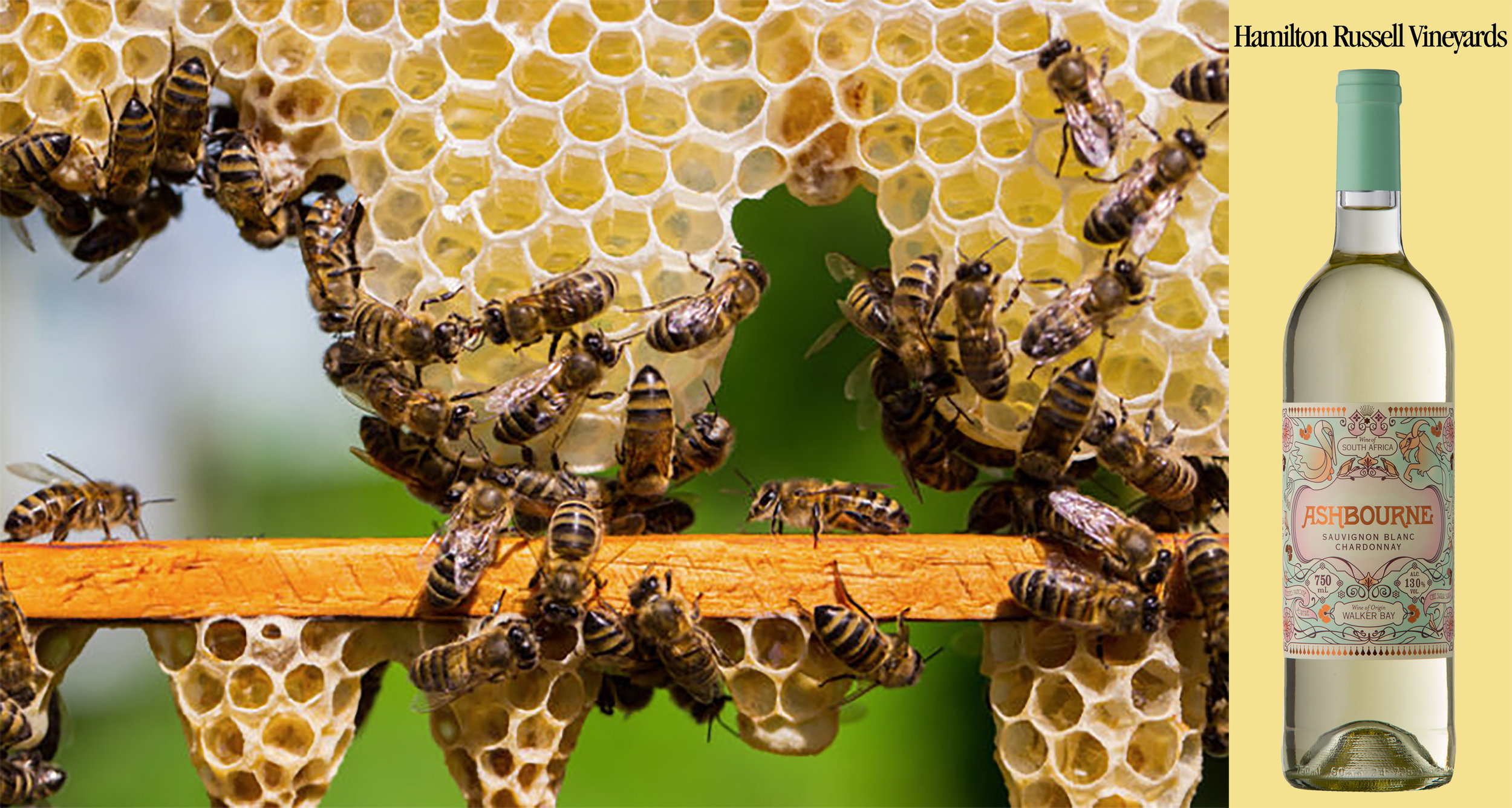 Wine Enthusiast: Terroir and Honey: Where Wine and Bees Meet ft. Hamilton Russell Vineyards | 03/9/2017