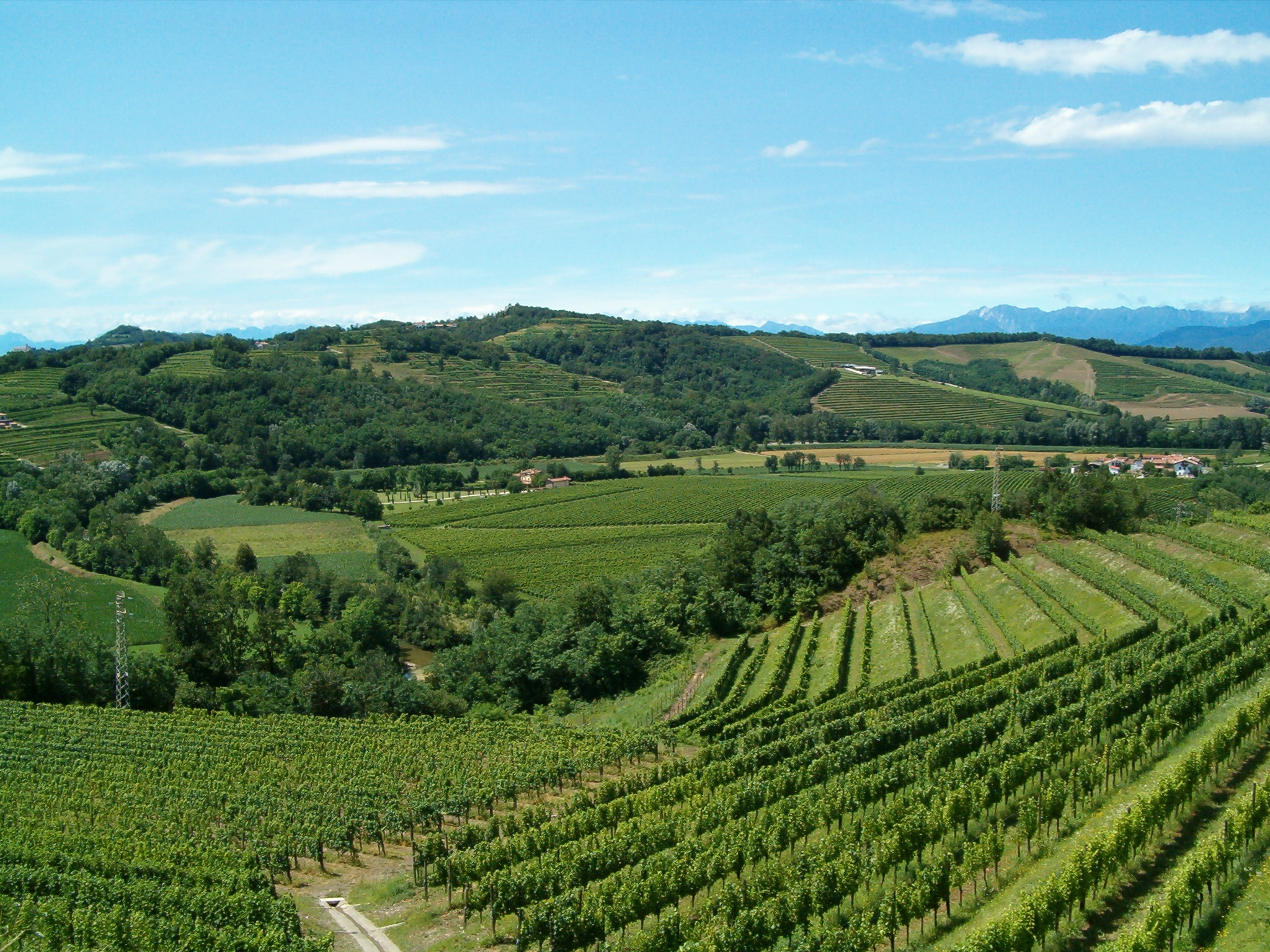 Vineyards 2.JPG