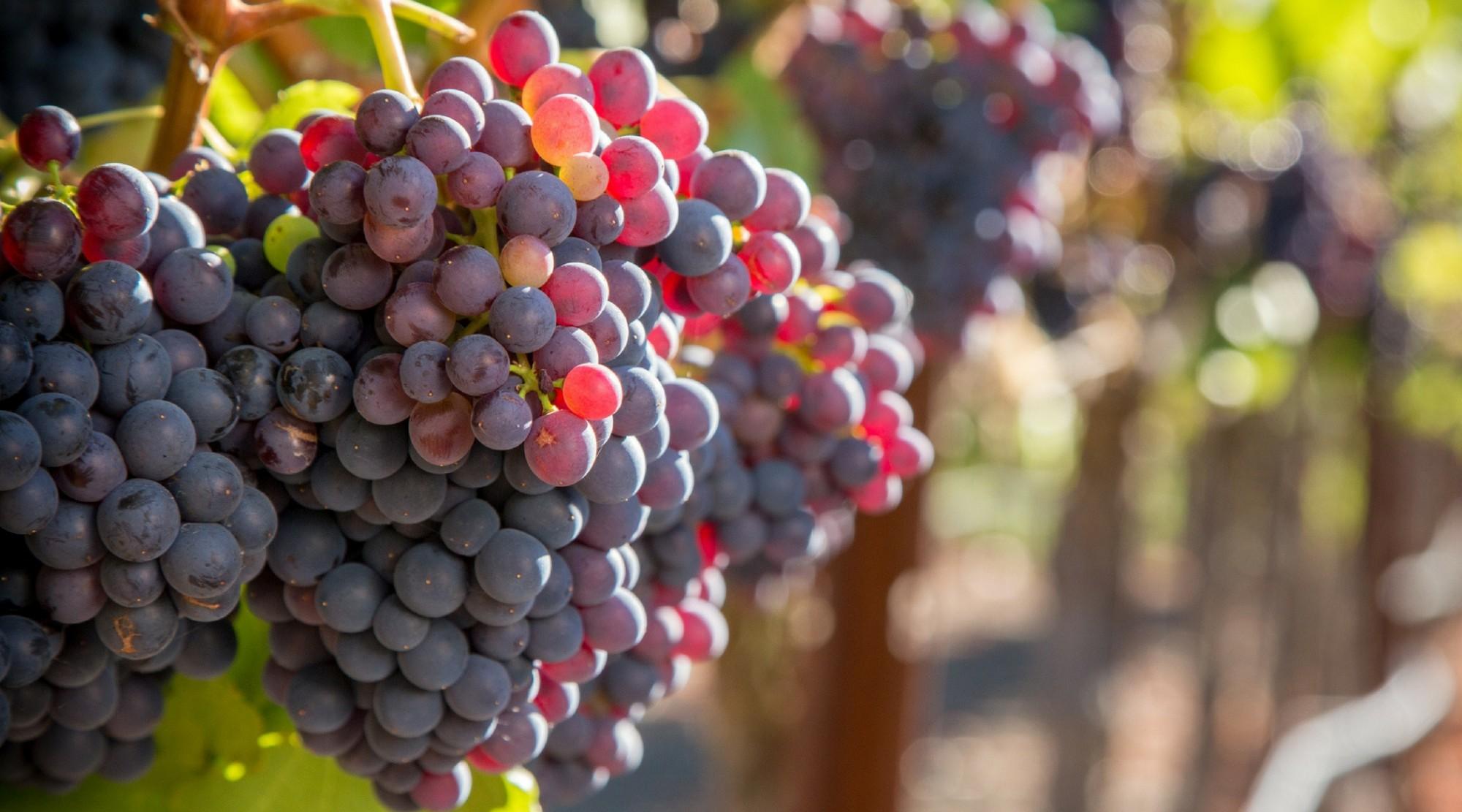The Splendid Table: An expert guide to American Rhône wines | 09/08/17