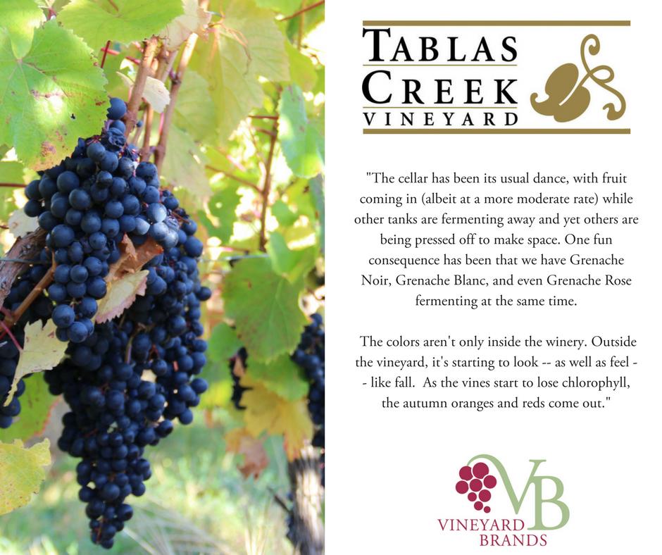Harvest_Tablas Creek.png