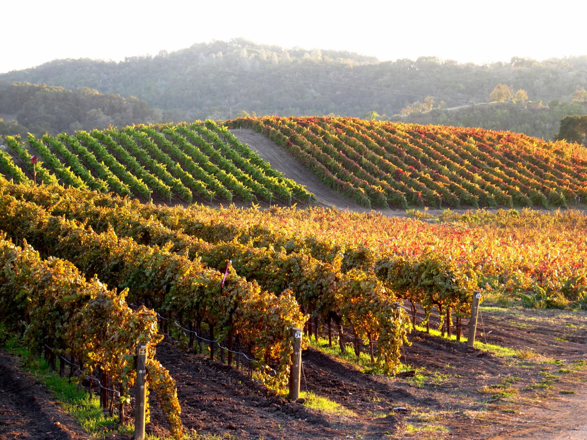 Tablas Creek Vineyard Harvest Sunset at Tablas Creek.jpg