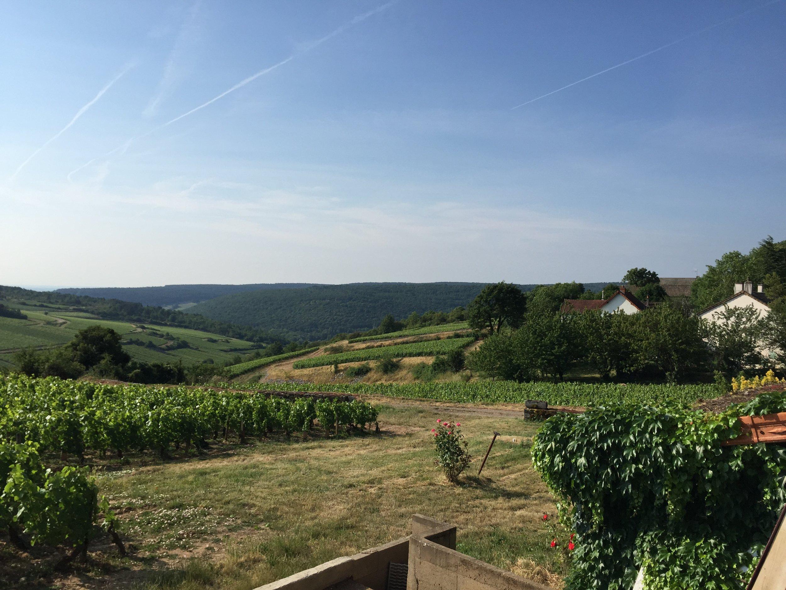 Decanter: Top value white Burgundy 2016 wines (ft. Domaine Louis Michel & Fils, Domaine Alain Gras) | 1/4/18