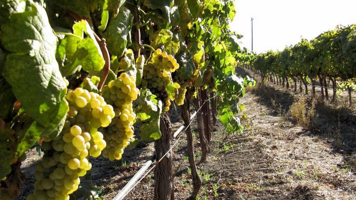 San Luis Obispo Tribune: Introducing Paso Robles' lighter side: Off-beat white wines | 03/20/18