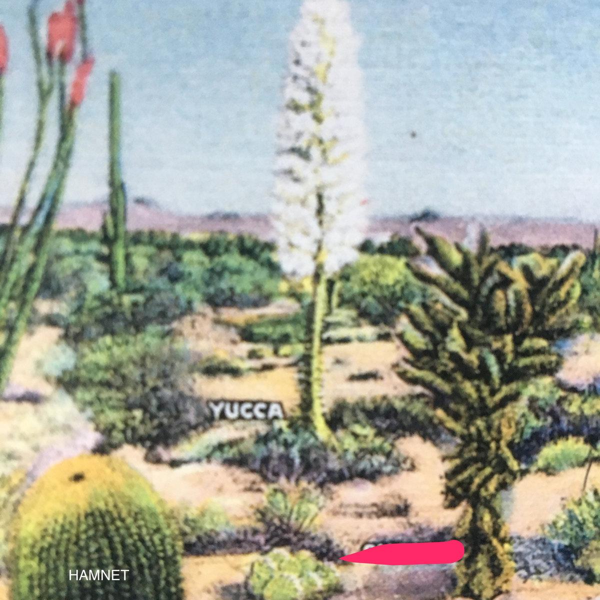 Yucca!