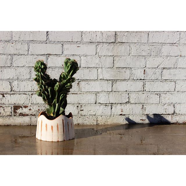 A new cactus for our studio in a wave top planter.