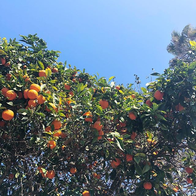 Oranges and sky forever.