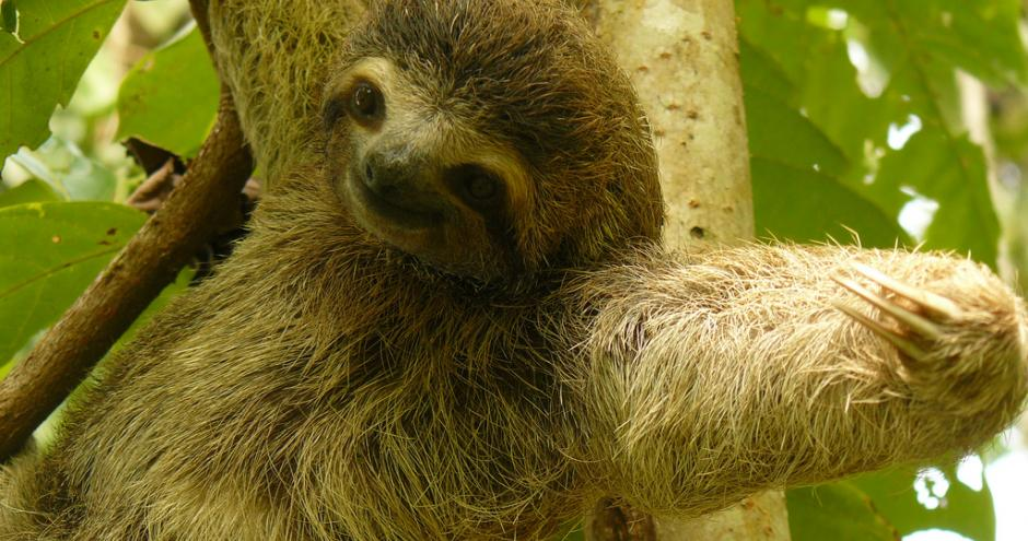 sloth_tree2_0.jpeg