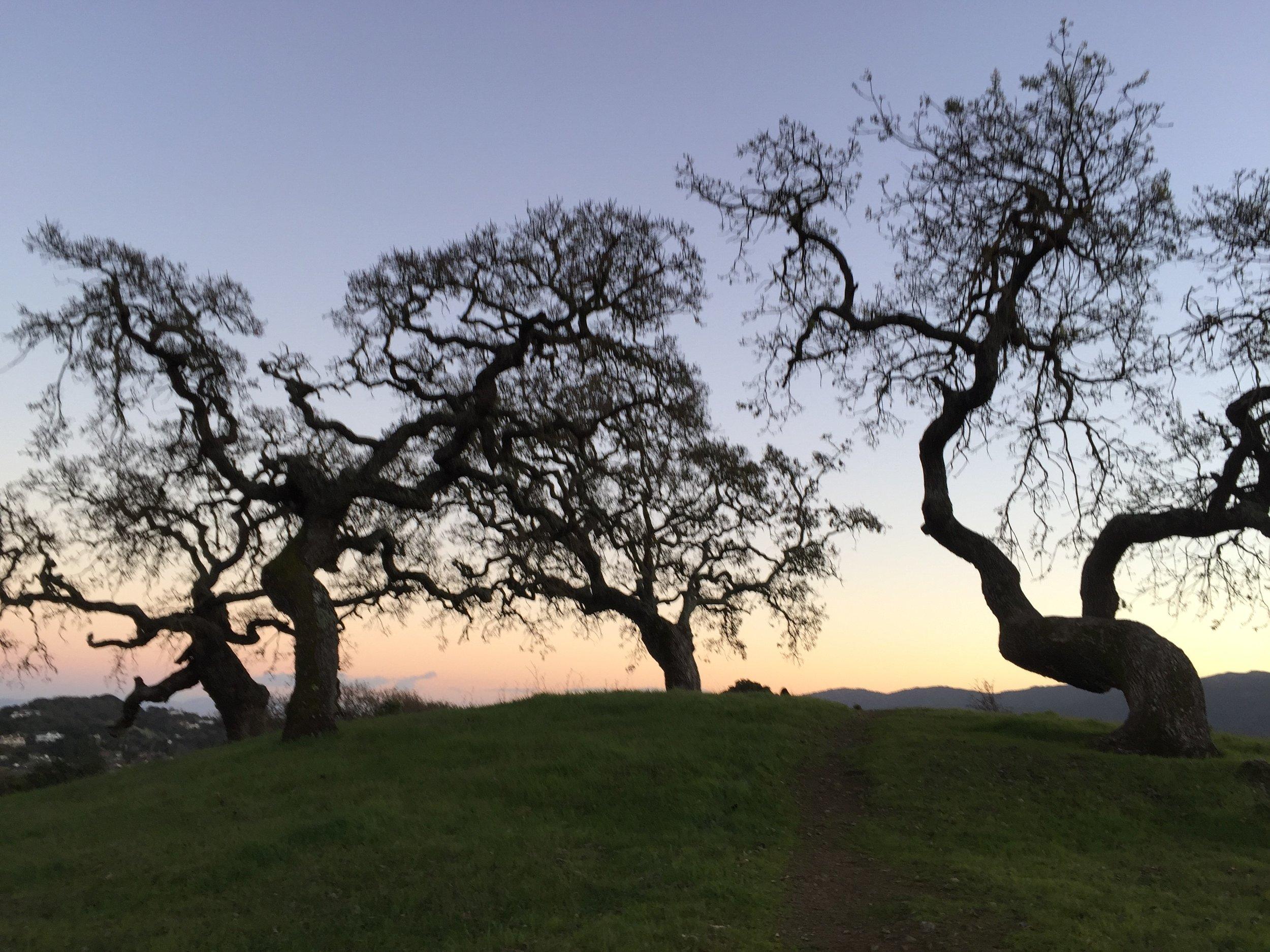 oaks - banner.jpg