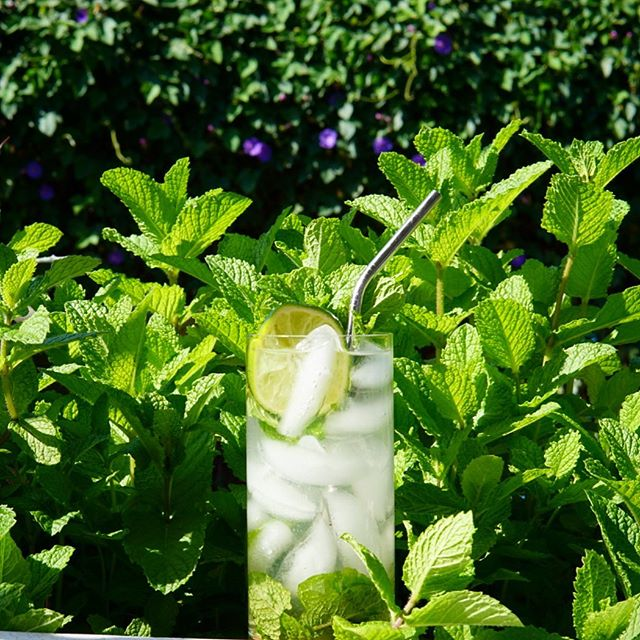 Mojito  The mint is just unstoppable this year. It has been growing up to an inch a day. Too bad I do not care for the Missionary's Downfall.  Also, I remember why I'm not a fan of the mojito...mint clogging up the straw.  1 1/2oz Havana Club 3 1 spoon of sugar 8 mint leaves 1 lime Soda to fill  #mojito #rumgramming
