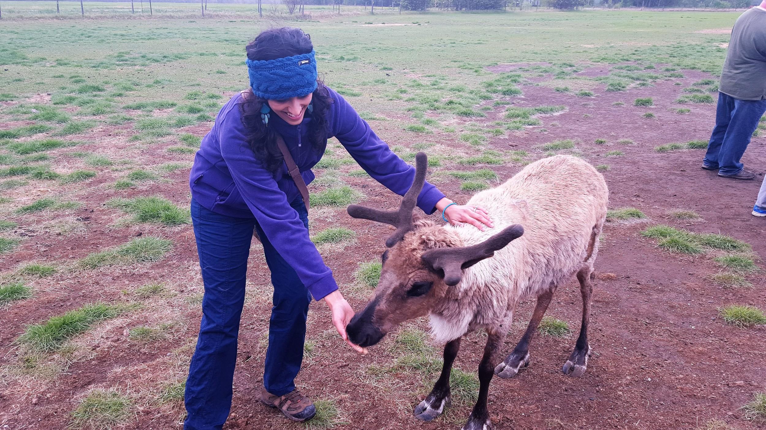 Super friendly reindeer