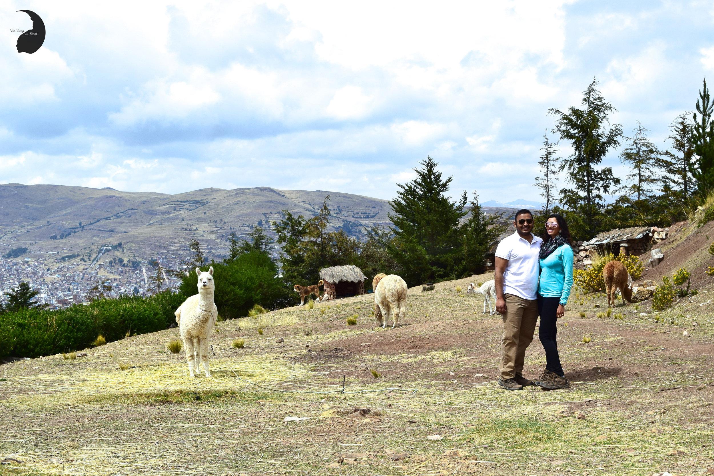 Llama Alpacca Farm