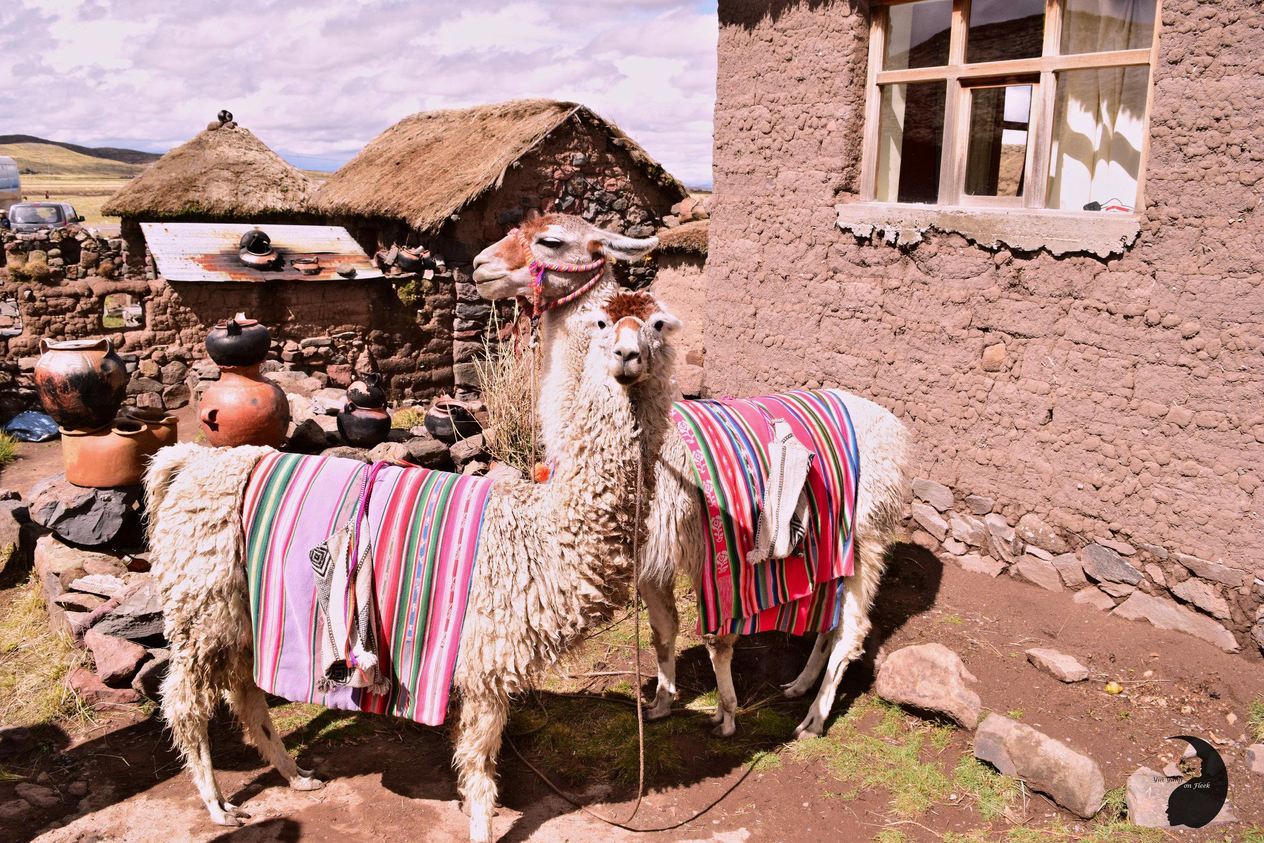 Yin Yang Llamas