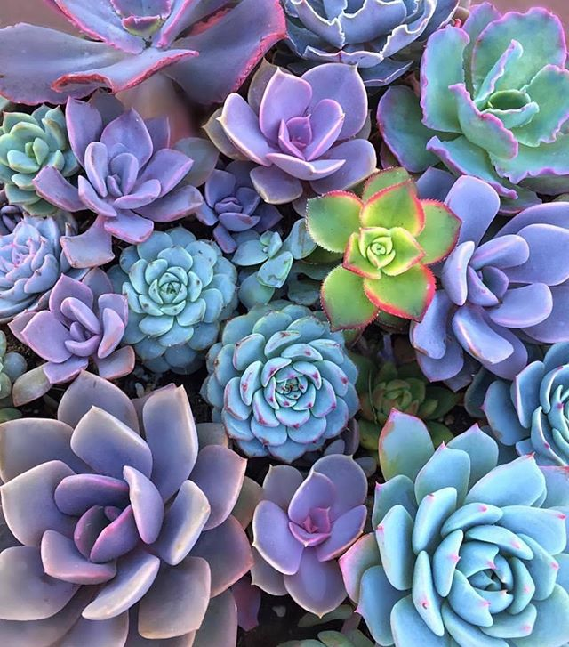 Is there a prettier color palette? I love my blues, greens and purples! 📷 via: @justbeingcon